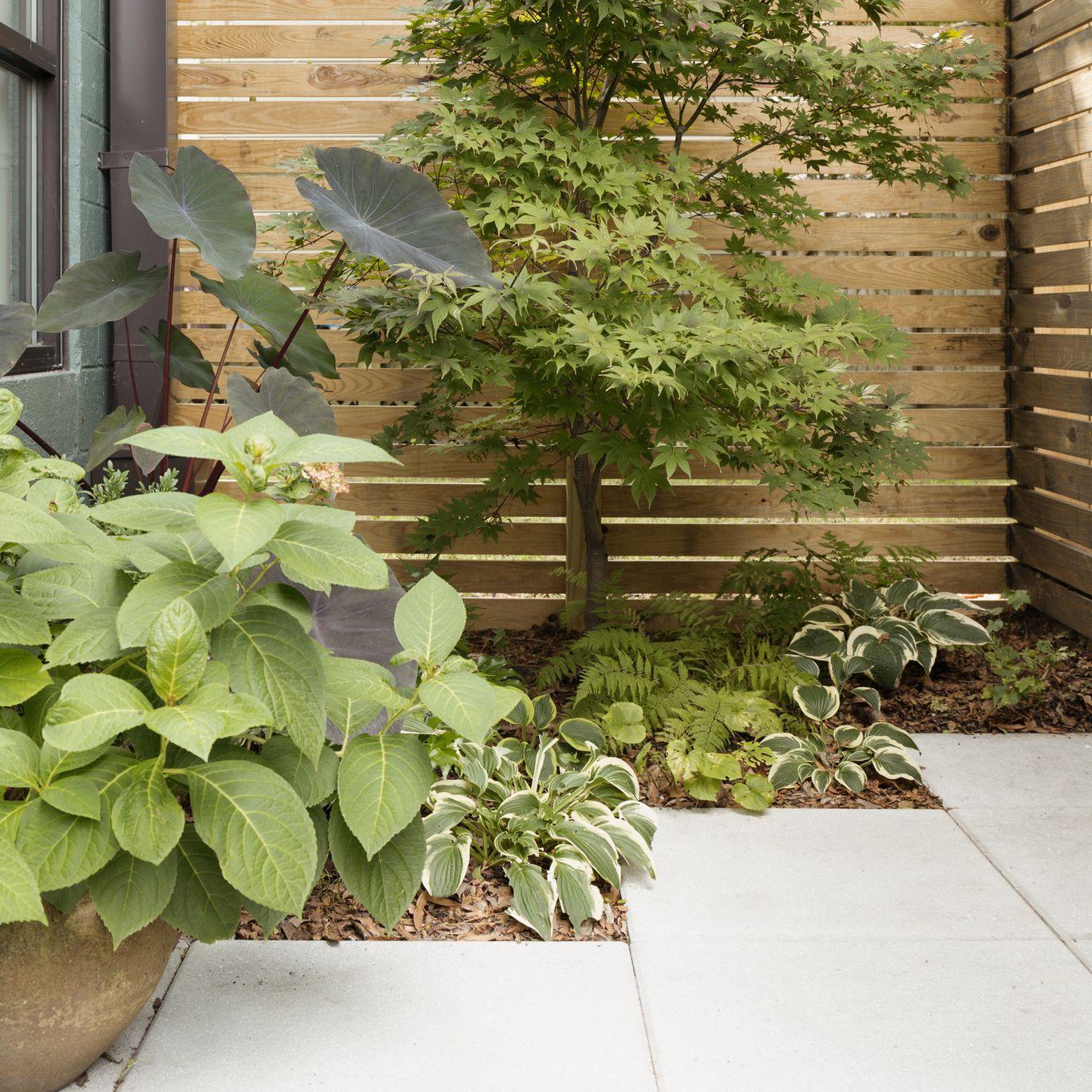 Tiered Contemporary Urban Garden: Минимальный уход за садом